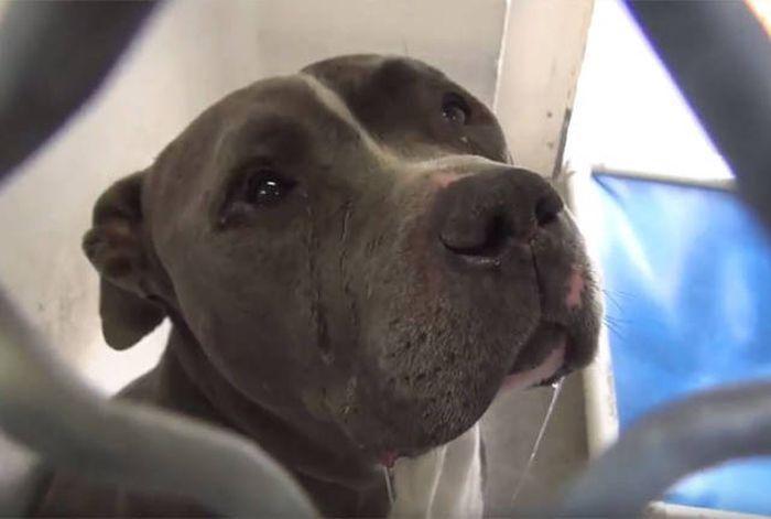 Грустящую собаку забрали из приюта и она повеселела (11 фото)