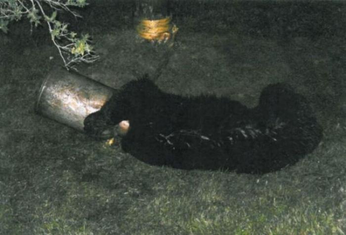 Спасение застрявшего медведя (10 фото)