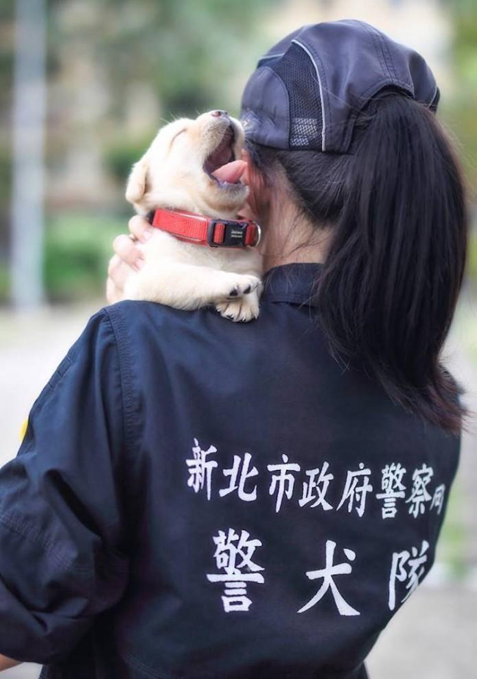 Полиция Тайваня пополнилась мимишными служащими (11 фото)