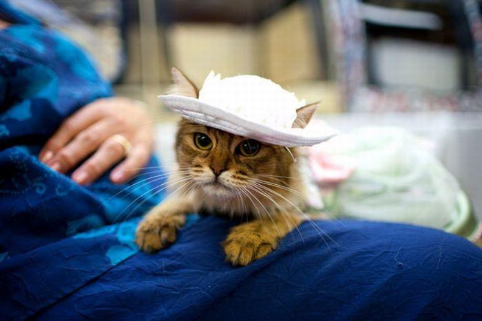 Показ кошачьей моды (35 фото)