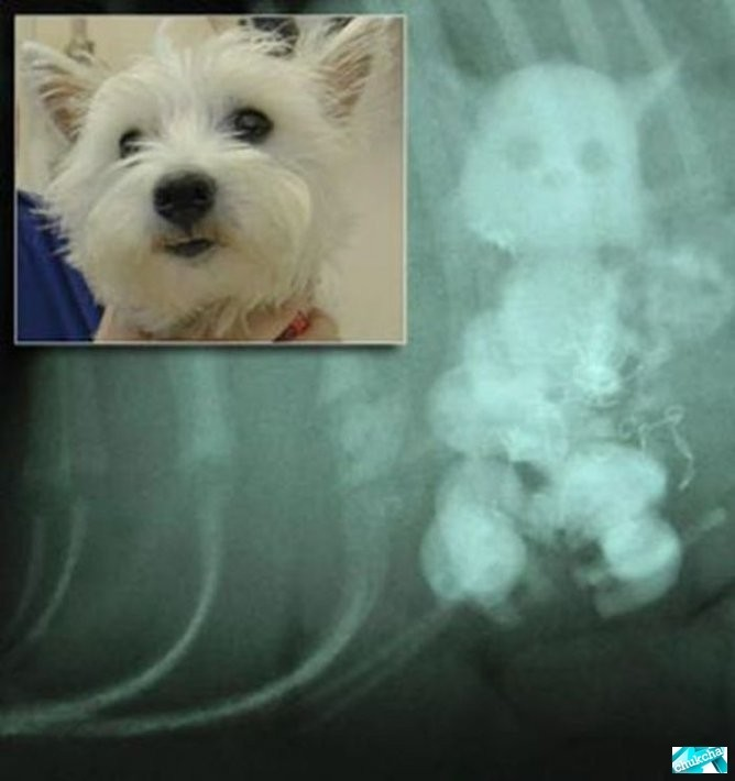 Собака, которая жрет кошек (4 фото)