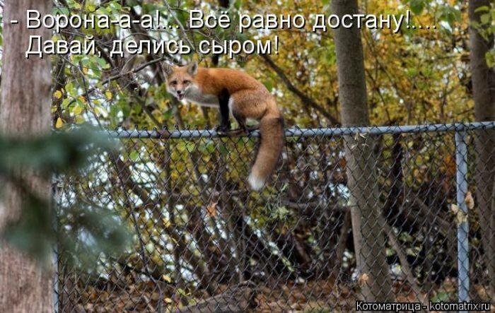 Забавные животные (50 фото)