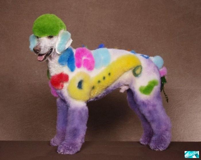 Креативные стрижки собак (12 фото)