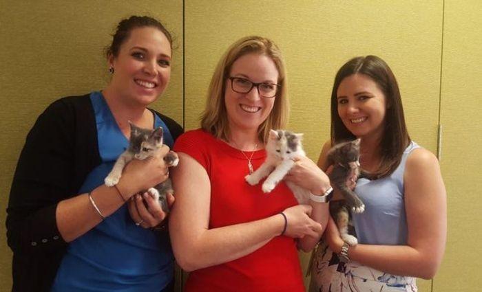 Кошка Квенда, которая стала звездой интернета (3 фото)