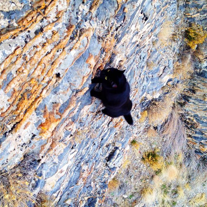 Кошка-скалолаз ходит в горы со своим хозяином (16 фото)