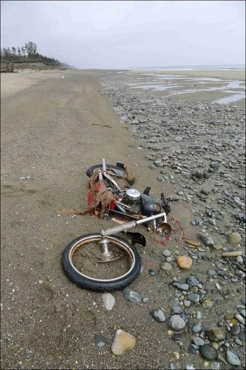 Harley Davidson: Из Японии в Канаду и обратно (5 фото)