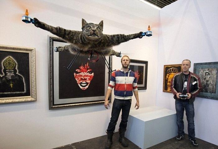 Летающий кот из Голландии (5 фото)