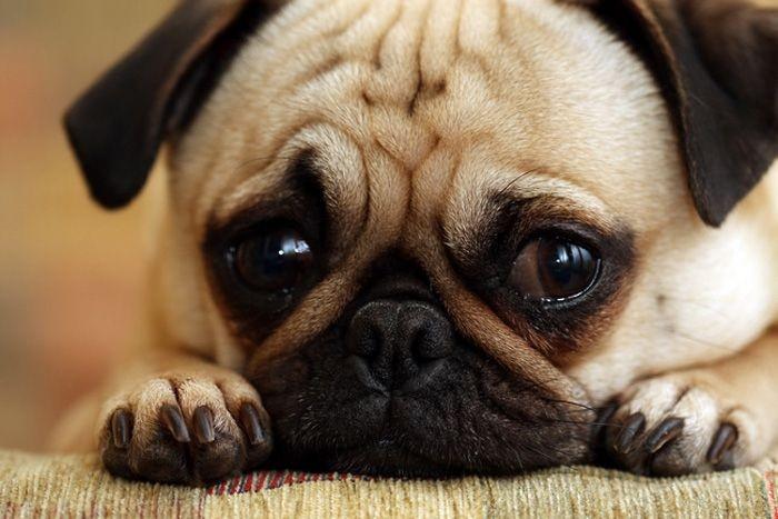 Самые грустные собачки (15 фото)