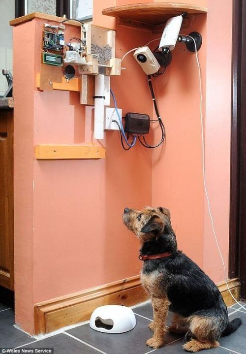 Машина для кормления собаки через Twitter (3 фото)