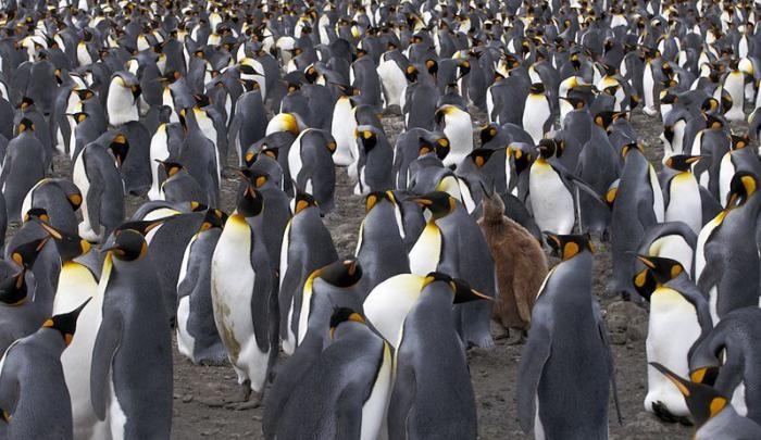 Мир животных (17 фото)