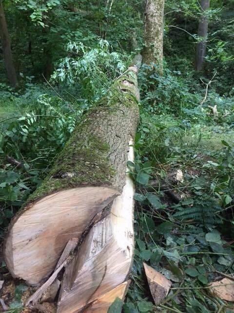 Егерь выпилил себя из-под упавшего на него дерева (8 фото)