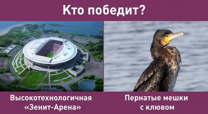 «Зенит-Арена» и бакланы: мемы в сети (2 фото)