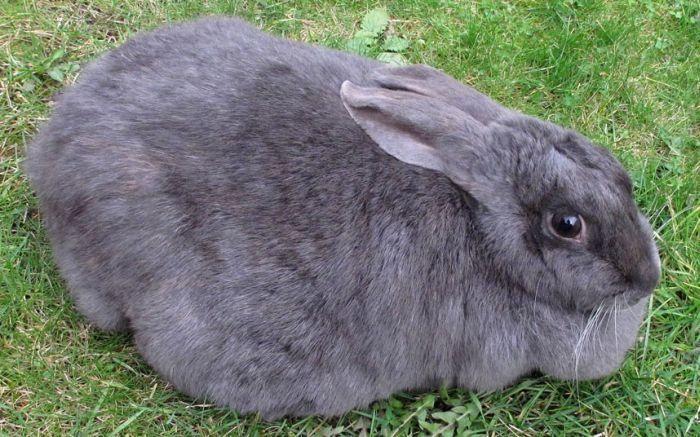 Слишком толстые животные (13 фото)