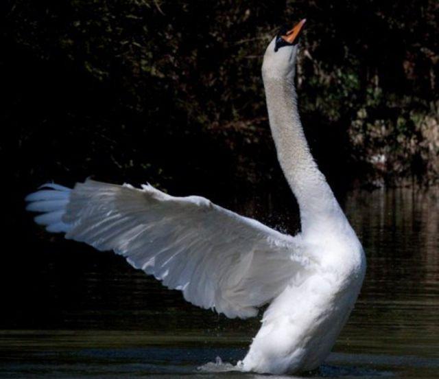 Angry Bird в реальной жизни (6 фото)