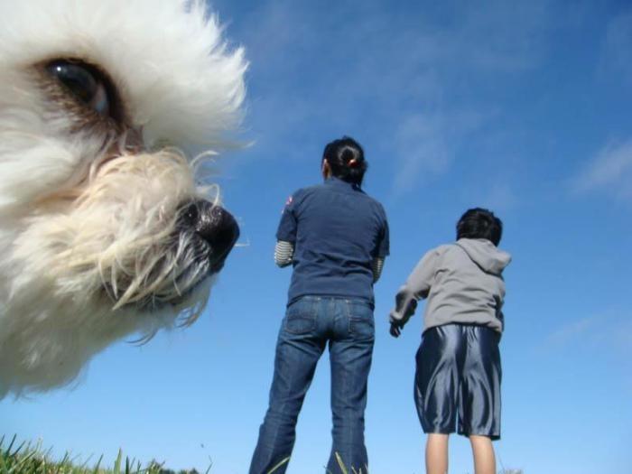 Фотобомбы с животными (15 фото)