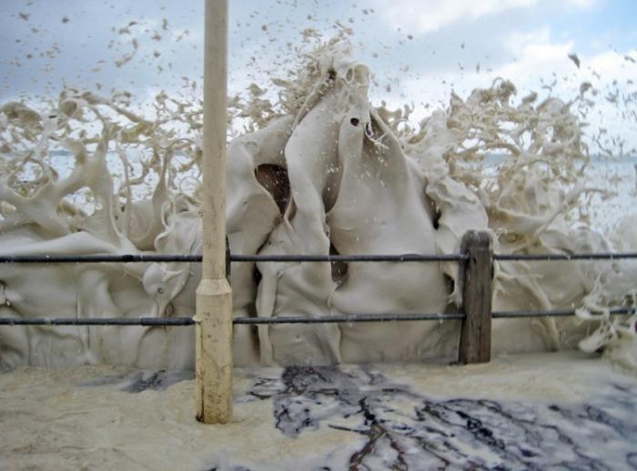 Морской капуччино (9 фото)