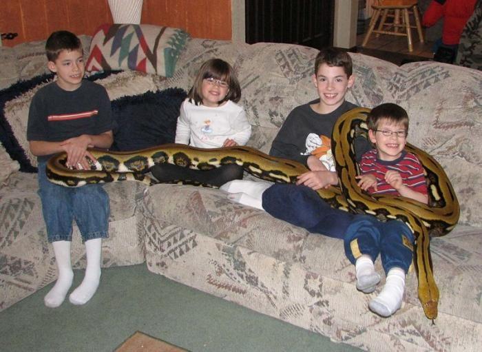 Как питону живется в семье ветеринарного врача (12 фото)