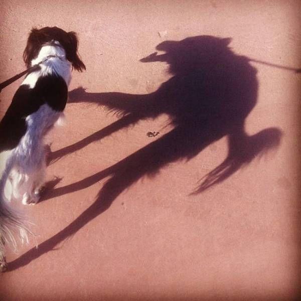 Причудливые тени (17 фото)