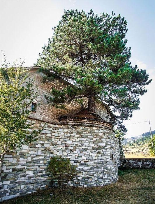 Дерево на крыше церкви в Греции (5 фото)