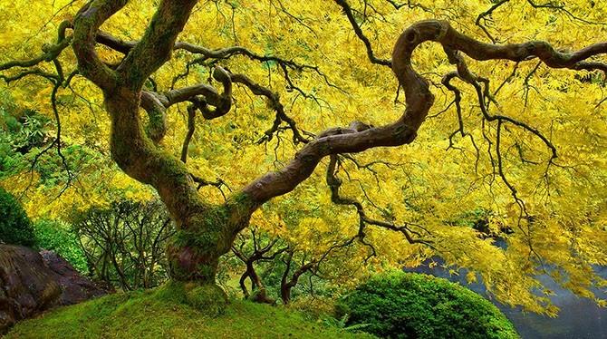 Яркие цвета осени (11 фото)
