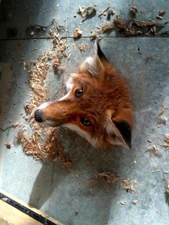 Фейлы животных (18 фото)