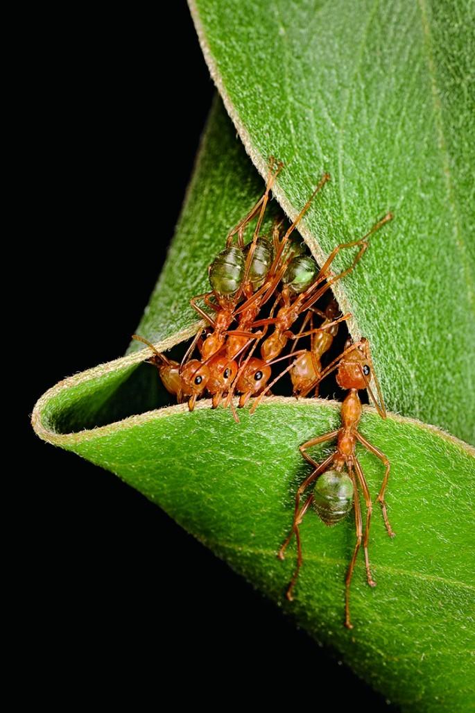 Самые необычные жилища насекомых и животных (11 фото)