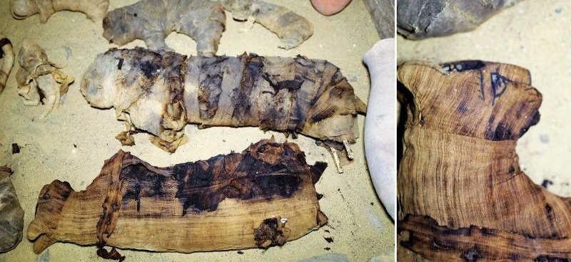 В Египте нашли редкие мумии кошек и скарабеев в 7 гробницах возле пирамид (10 фото)