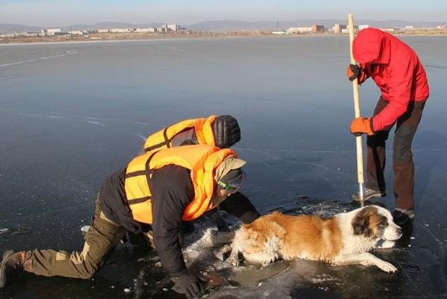 В Забайкалье спасатели случайно обнаружили пса, который вмерз в лед (3 фото + видео)