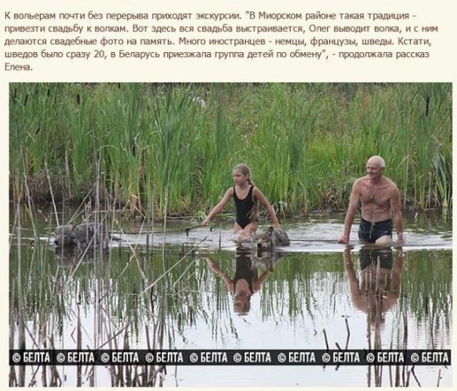 Белорусская семья приручила волков (12 фото)