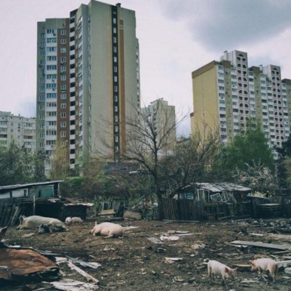 Тоска городских окраин (25 фото)