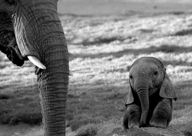 Самые милые малыши в мире (20 фото)