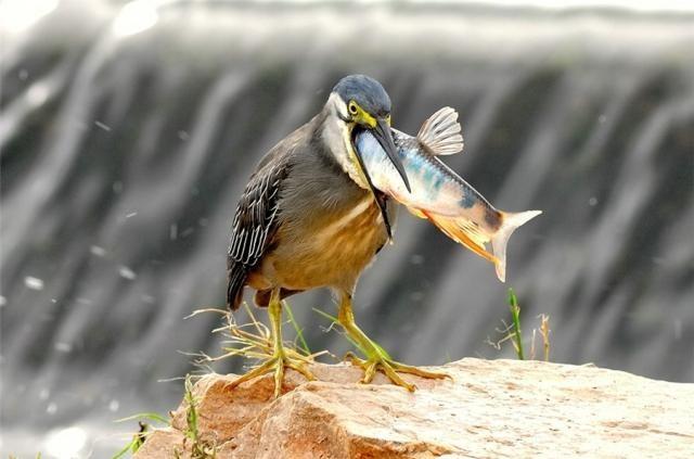 Смешные и забавные птицы (34 фото)