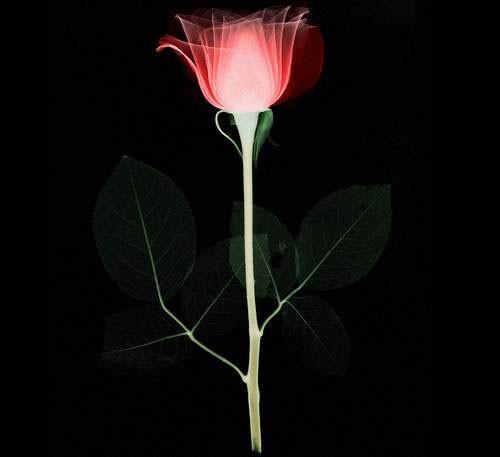Красота рентгена (15 фото)