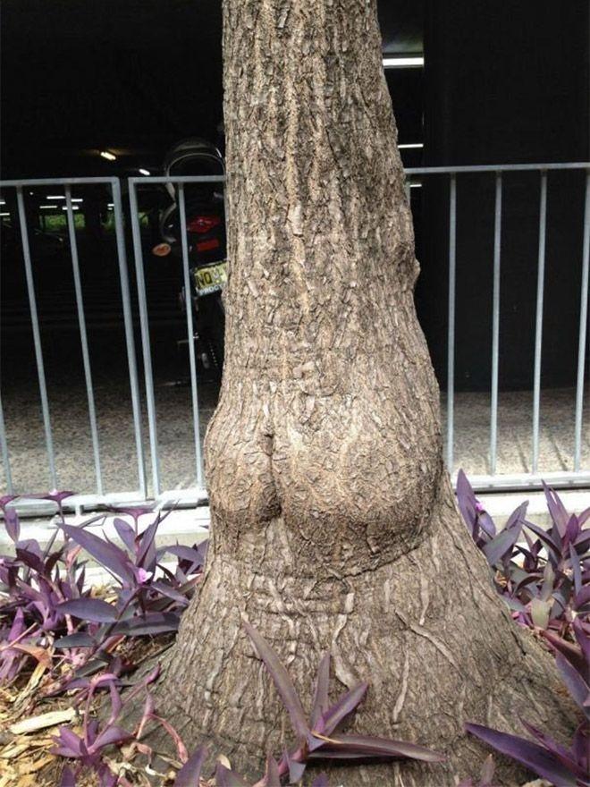 Деревья с природными формами (19 фото)