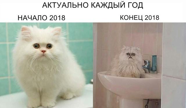 Прикольные картинки (93 фото) 06.12.2018