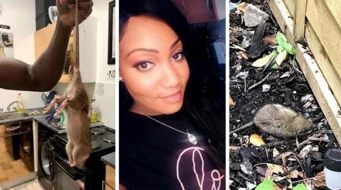 Огромные крысы превратили жизнь этой британки в сущий ад (3 фото)