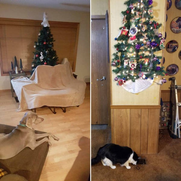 Креативные способы защиты новогодних украшений от домашних питомцев (20 фото)