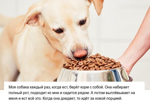 Странные привычки домашних питомцев (14 фото)
