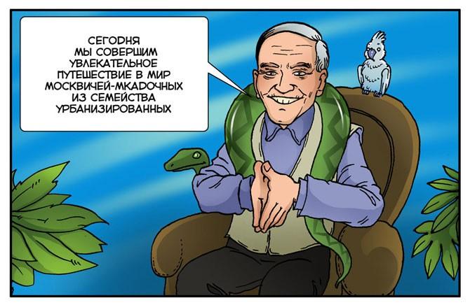 Москвич обыкновенный (16 фото)