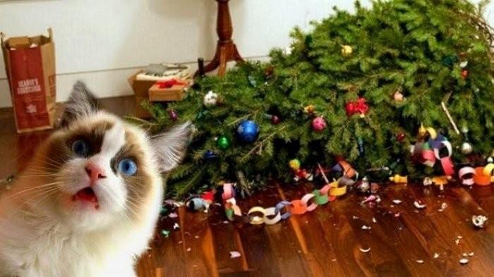 Коты и новогодние елки (26 фото)