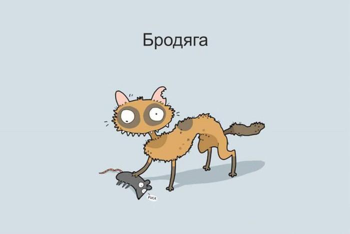 Очень нестандартные кошки (12 фото)