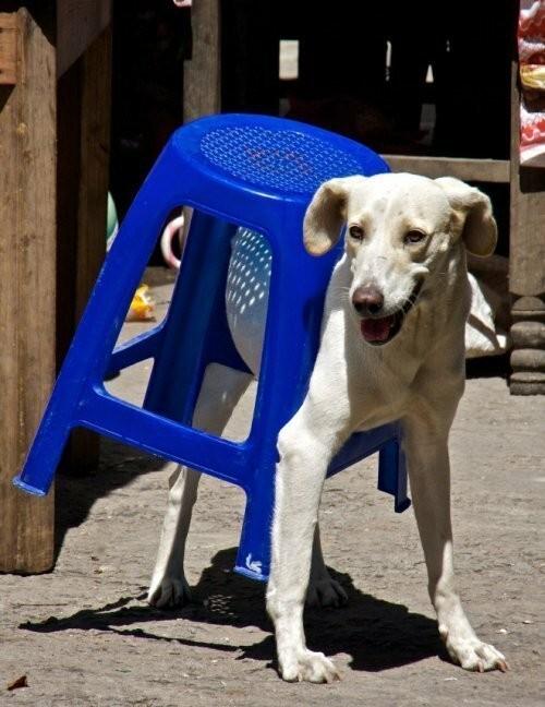Кошаки и собаки в непонятных позах (25 фото)