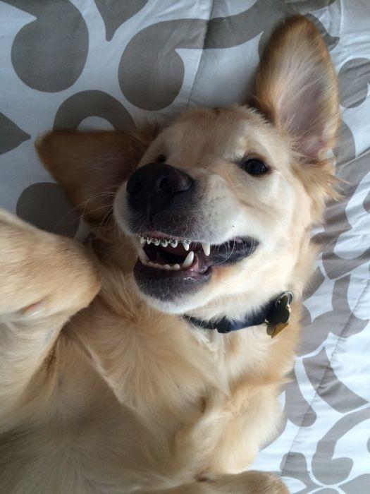 Щенок с брекетами на зубах стал новой звездой Интернета (7 фото)
