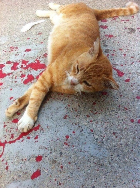 История раненой кошки (3 фото)