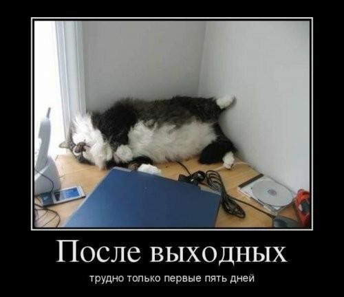Фотоприколы с котами (68 фото)