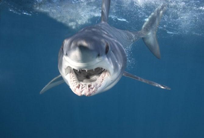 Челюсти акул убийц (17 фото)