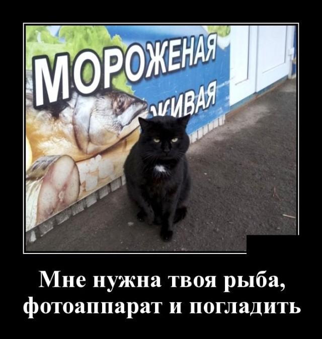 Демотиваторы (30 фото) 14.01.2019
