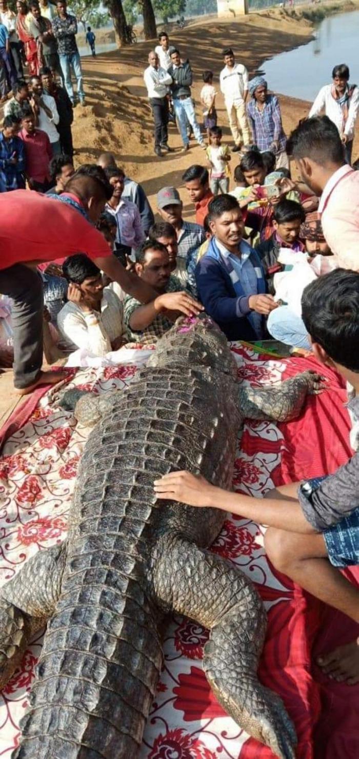 В Индии на похороны крокодила собралось 500 человек (2 фото)
