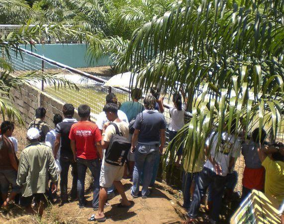Филиппинцы поймали крокодила весом больше тонны (6 фото)