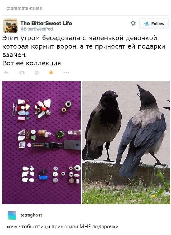 Такие умные вороны (3 скриншота)